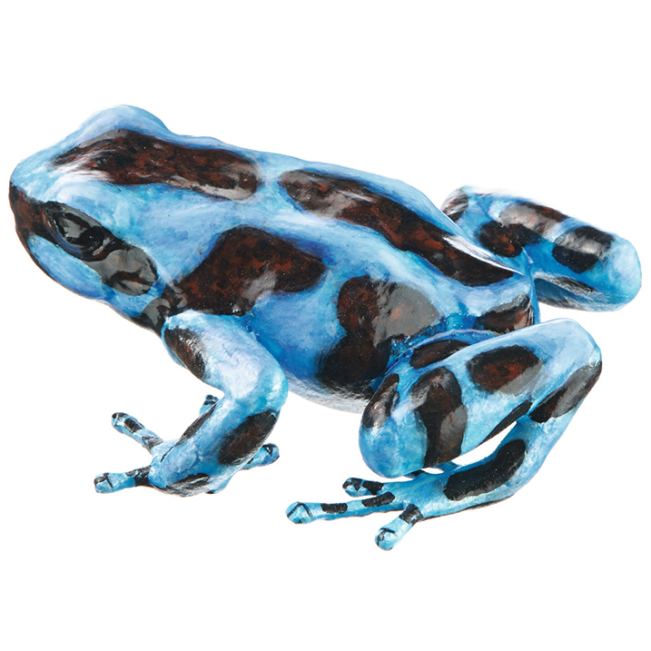 uk availability ded76 27399 Click to Enlarge. ZOS1251 4 GREEN AND BLACK POISON DART FROG